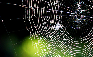 Scientists develop sustainable spider silk in green materials breakthrough