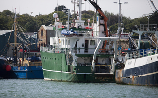 Sustainable British cod on the menu after stocks recover
